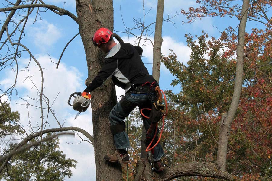Tree Services West Chester - arborist on tree cutting
